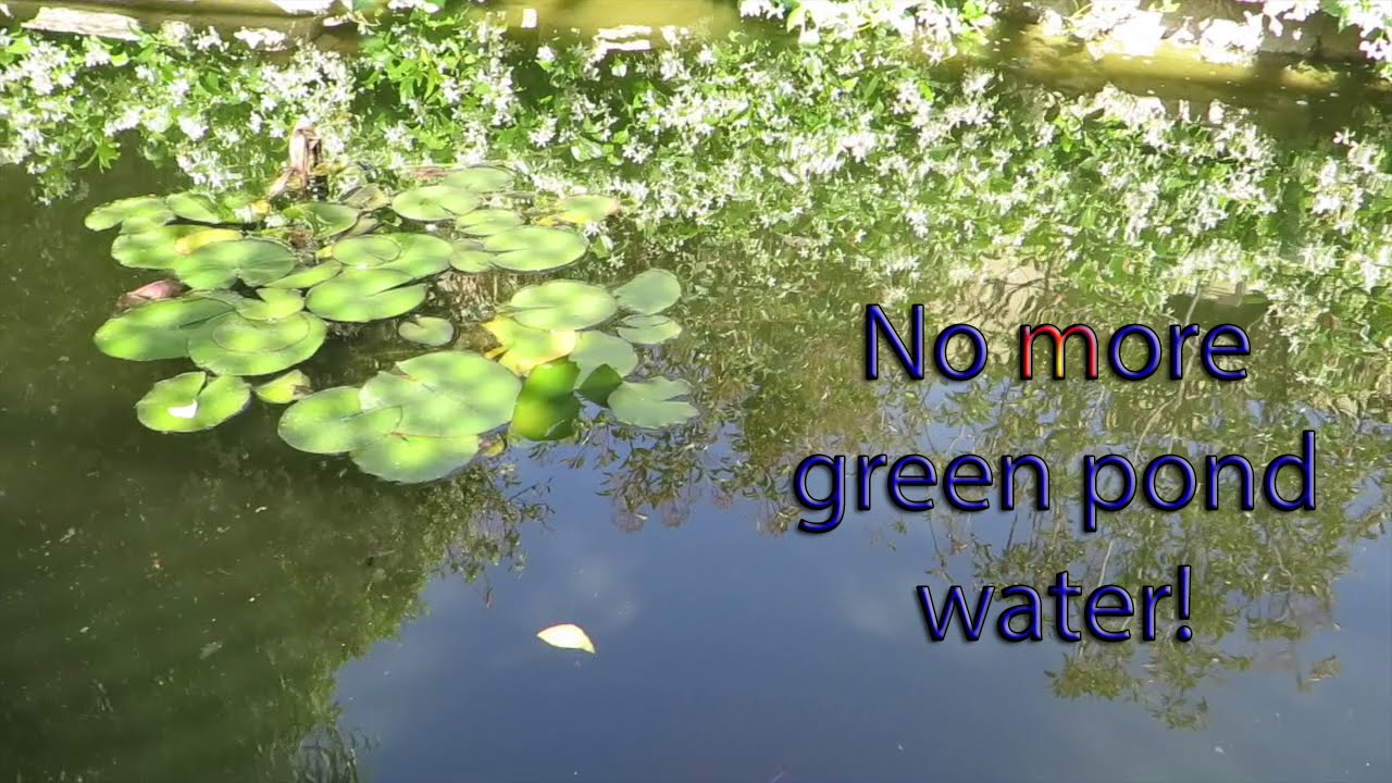 Best Water Filtration System >> No more green pond water! Build a pre-filter! - Amazin Walter